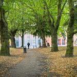 Amongst the trees JQ