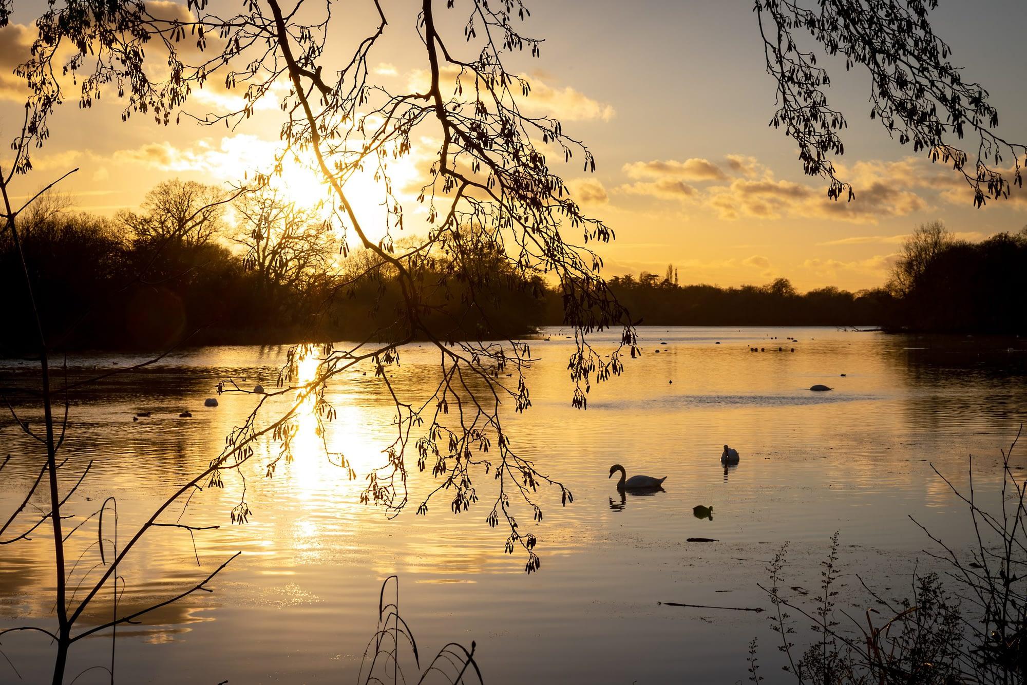Coombe Abbey Lake
