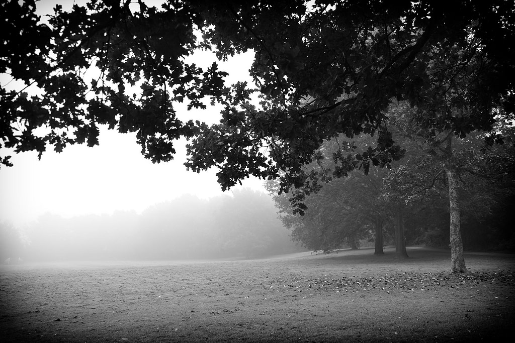 Fog in Knowle Park