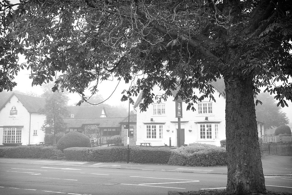 Fog in the village