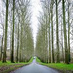 Umberslade Park Treeline