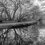 Black and white reflections in the river