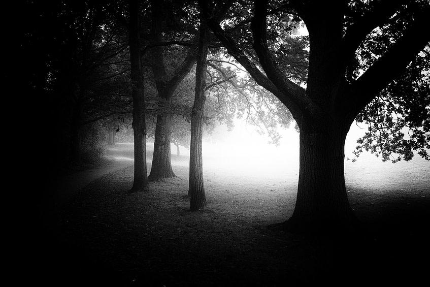 Fog Knowle Park